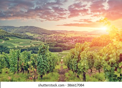 Panorama of Burgundy vineyards . France