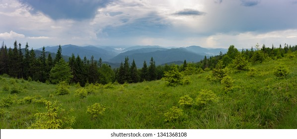 Panorama of Carpathians Mountains, the photo is taken in Ukraine, national park Skolevsky Beskidy. The cloudy sky over fresh greens of thickets of bilberry, herbs and fir-trees.
