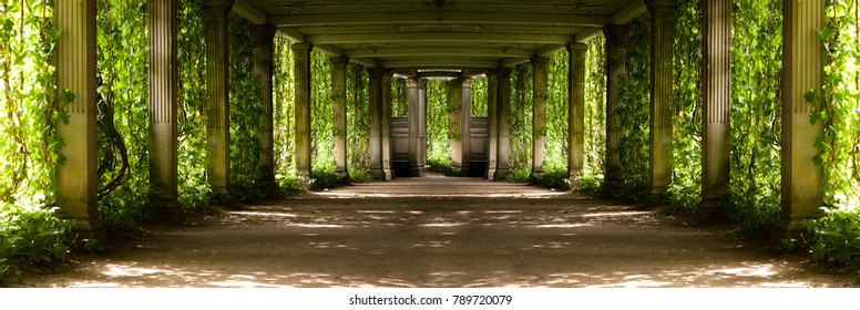 panorama of a colonnade with old columns covered with wild grapes, highlighted with backlight