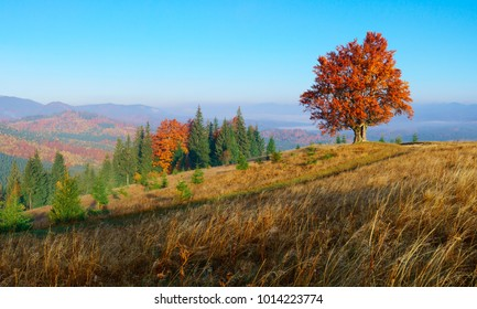 Panorama of colorful autumn landscape in mountains with lonley tree.