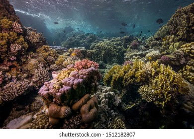 Panorama of the coral reef. Egypt, southern Red Sea.