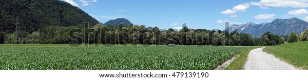 Panorama of corn field near the road in Austria