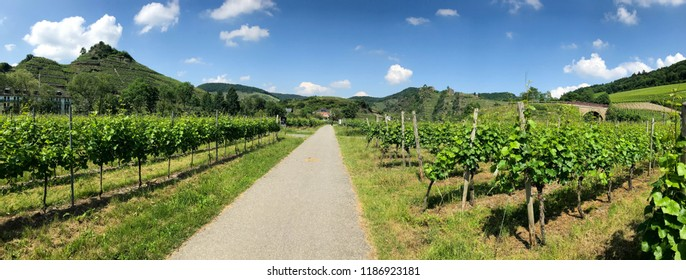 Panorama cycle path Ahrtal with grape vines