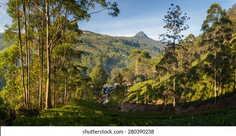 Panorama of Dalhousie town with Adams peak and tea plantations at sunrise, Srilanka, Asia