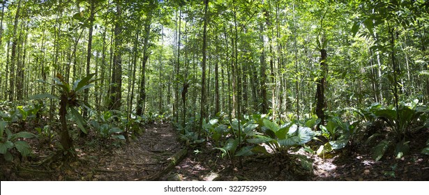 Panorama of deep green jungle forest on the way to Salto Angel in Canaima National Park, Venezuela.