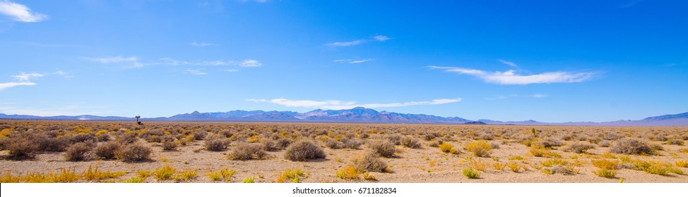 A panorama of the desert area outside Area 51 with desert scrubbery, a distant joshua tree and cow and mountains in the background