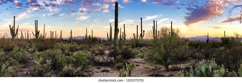 Panorama Desert at Saguaro Nationa Park (West) in Arizona