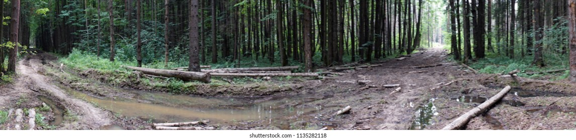 Panorama of dirt road in the forest