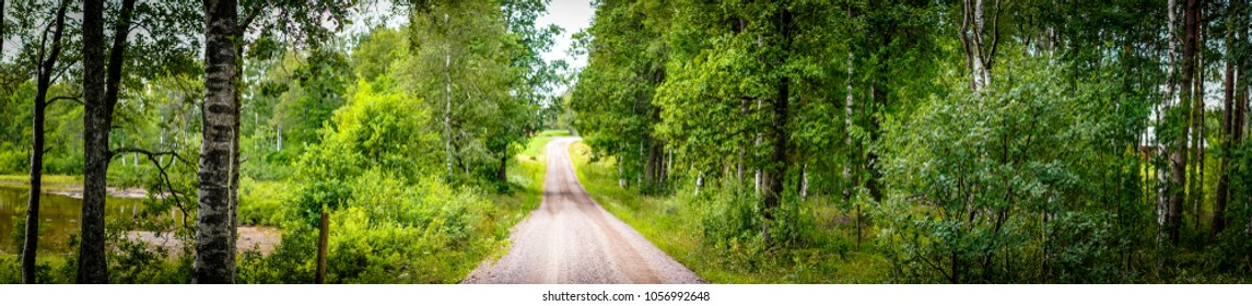 Panorama of a dirt road in a green forest in the spring