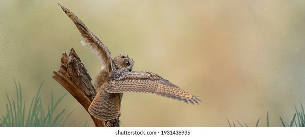 Panorama of a Eurasian Eagle Owl. Sit on a stump. Spread the wings for takeoff. Bird looks back, the red eyes stare at you. Beautiful blue and green sky in the background. Composite photo. Cover