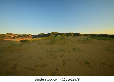 Panorama of the evening mountains of the Caucasus and the yellow-golden sand of the Sarykum barkhana with green desert plants in Dagestan in the Caucasus