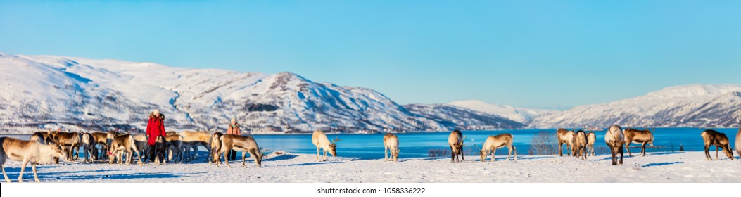 Panorama family of mother and her daughter outdoors feeding reindeers on sunny winter day in Northern Norway