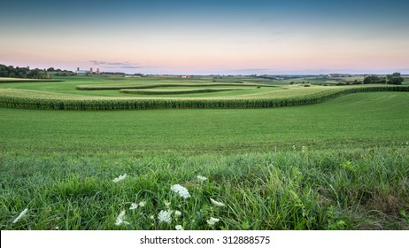 Panorama of Farm Land in the Driftless Area in Wisconsin - with rolling hills and fields of curving corn and the setting sun.  America!