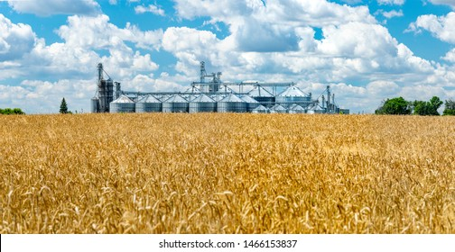 Panorama of the field of ripe wheat and elevator silos on the background