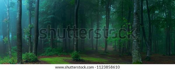 Панорама туманного леса. Сказка жутко выглядящий лес в туманный день. Холодное туманное утро в лесу ужасов