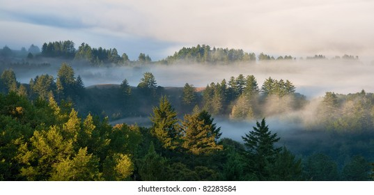 Panorama of foggy sunrise in a mountain forest in California