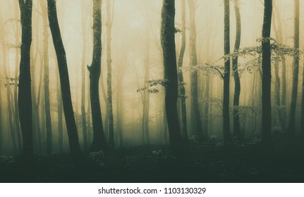 panorama of forest background with beautiful sunlight