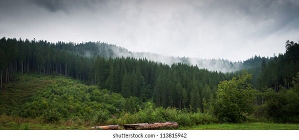 Panorama of forest in a rainy day