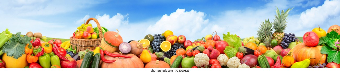 Panorama fruits and vegetables against background green field and bright sky. Copy space