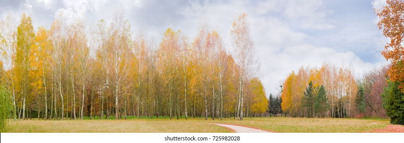 Panorama of the glade in autumn park with walkway and birch trees in the background on a cloudy day