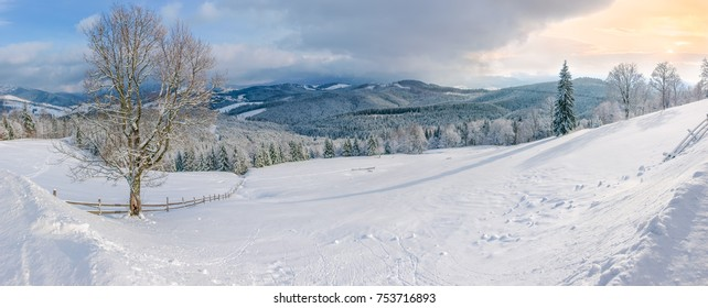 Panorama of a glade on the mountain slope with single deciduous tree and fence on a background of  sky and mountain range covered with spruce forest in Carpathian Mountains in winter