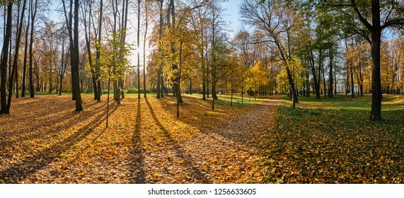 Panorama of Golden autumn in park, avenue of trees, sunny day, clear weather, reflections, leafs on the ground, shadows of trees, yellow color