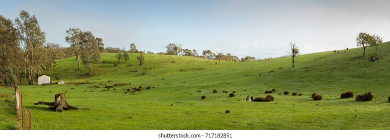 Panorama of a green paddock on a farm with shed, Dalesford, Victoria, Australia