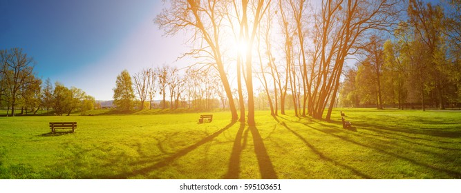 Panorama of a green park with trees in the early morning. Spring sunrise