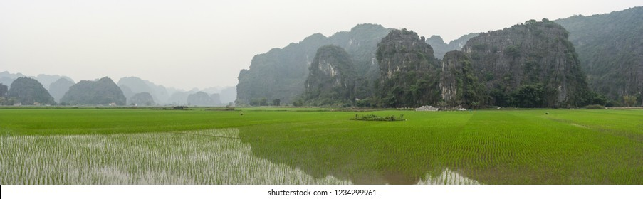 Panorama of green rice fields in front of the famous rock formations of Ninh Binh, near Tam Coc, in Vietnam. People are working on the fields, planting seeds in the water
