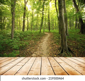 Panorama of a green summer forest with wooden floor