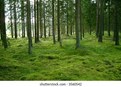 panorama of a green wood with moos