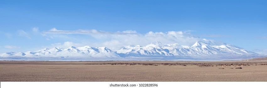 Panorama of Gurla Mandhata mount and herd of kiangs, wild asses at Manasarovar lake in Tibet, China. It is native to the Tibetan Plateau, where it inhabits montane and alpine grasslands.