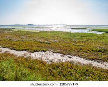 Panorama of harbour, salt marsh and tidal flat at low tide of Wadden Sea on West Frisian island Schiermonnikoog, Netherlands