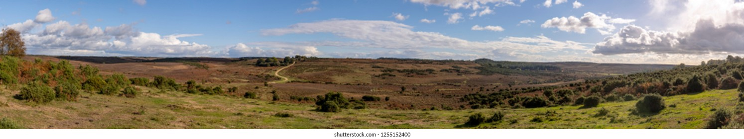 Panorama of heathland, grassland and ferns in autumn in New Forest, England.