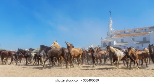 Panorama of horses running before baptism. El Rocio, Spain.