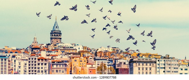 Panorama of Istanbul with Galata Tower at skyline and flying birds over town. Urban landscape of Istanbul with architecture of Beyoglu and Karakoy areas, travel background for your wide billboard.