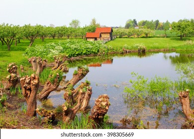 Panorama landscape in Betuwe, fruit orchards, shed and lake, Netherlands