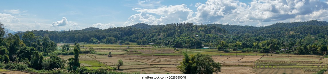 panorama landscape of empty organic  rice field with blue sky and cloud and tree background