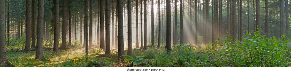 Panorama landscape of forest in the mist with sun rays. Magical beauty. Drentsche Aa. Drenthe. The Netherlands.
