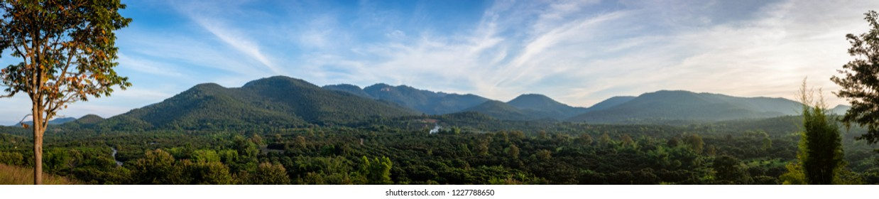 Panorama : landscape of longan garden in Lamphun, Thailand