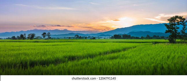 Panorama Landscape of north Thailand.  Mountains during sunset and Beautiful rice field natural landscape.