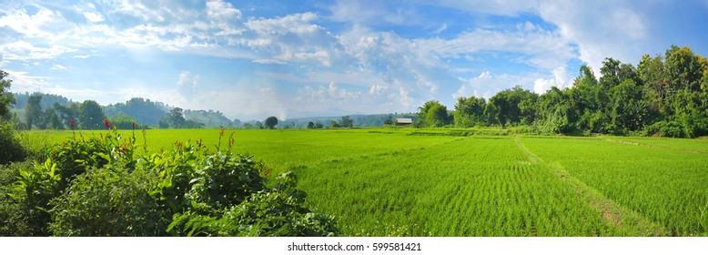 Panorama landscape of Thailand, Green rice field, The background is mountain and blue sky. Selective focus and free space for text.