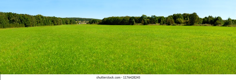 Panorama of a large green meadow. Green grass on a meadow surrounded by forest. Panorama of nature on a large scale. Grass in a large meadow.