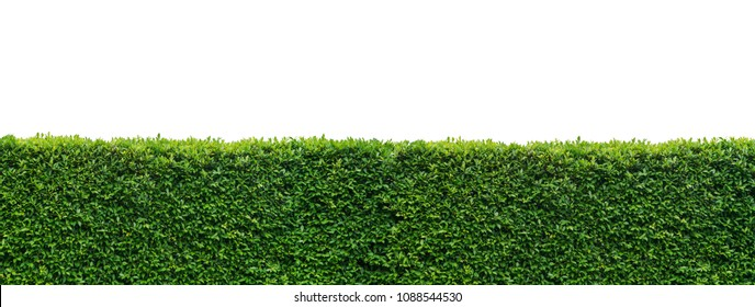 Panorama leaves wall isolated on white background