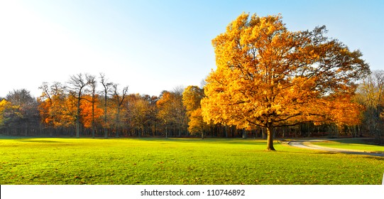 Panorama. Lonely beautiful autumn tree. Autumn Landscape.