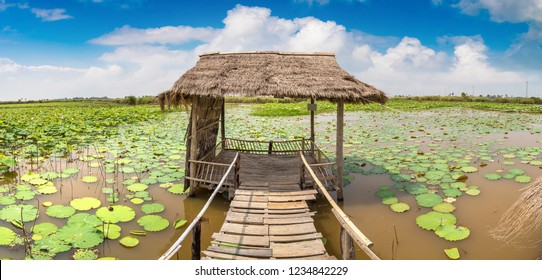 Panorama of Lotus farm near Siem Reap, Cambodia in a summer day