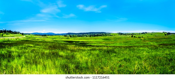 Panorama of the Lush Grasslands along Highway 5A, the Kamloops-Princeton Highway, between the towns of Merritt and Princeton in British Columbia, Canada