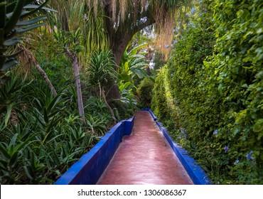 Panorama of The Majorelle Garden is a botanical garden and artist's landscape garden in Marrakech, Morocco. Jardin Majorelle Cactus and tropical palms. Paradise inside the desert country