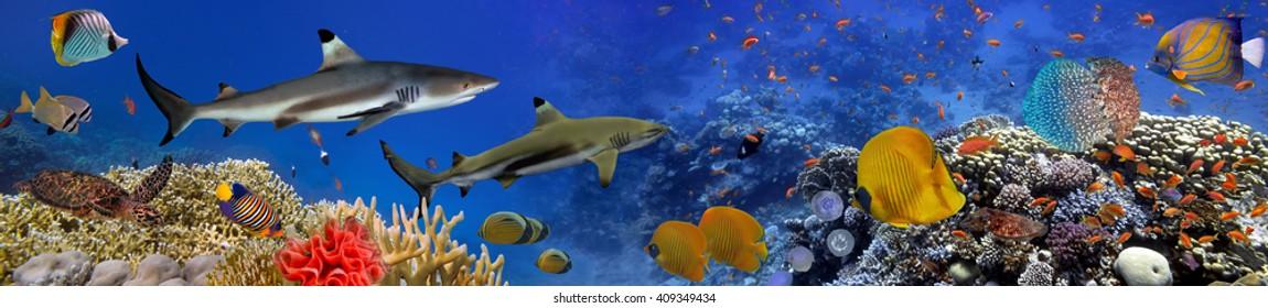 Панорама морских видов. Красное море, Египет