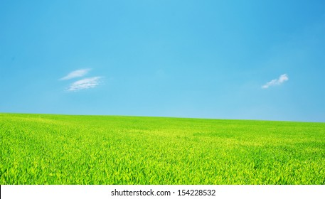 Panorama of a meadow with a green grass and the blue sky